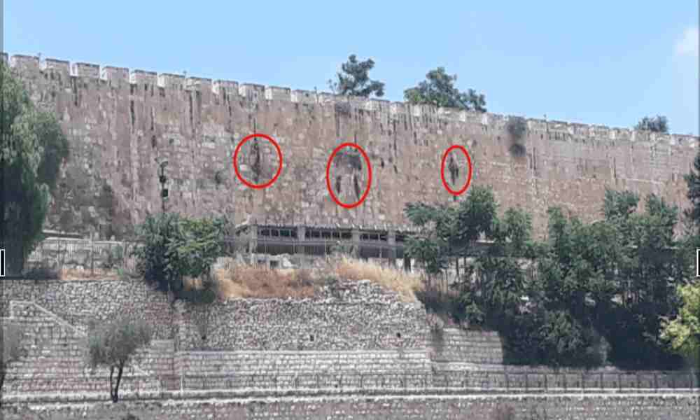Crece vegetación formando la palabra Dios en el muro del Monte del Templo